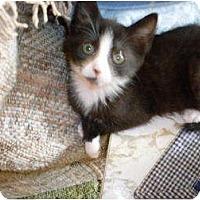Adopt A Pet :: Lucy - Kirkwood, DE