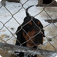 Adopt A Pet :: Tuffy - latrobe, PA