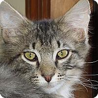 Adopt A Pet :: River - Vero Beach, FL