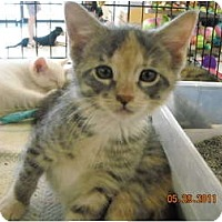 Adopt A Pet :: Alyssa - Riverside, RI