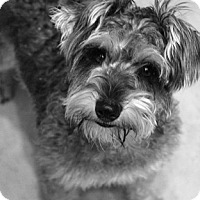 Adopt A Pet :: PENNY - Mission Viejo, CA