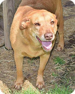 Terrier (Unknown Type, Medium)/Labrador Retriever Mix Dog for adoption in Iola, Texas - Naomi