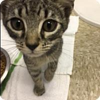 Adopt A Pet :: Sam - Medina, OH