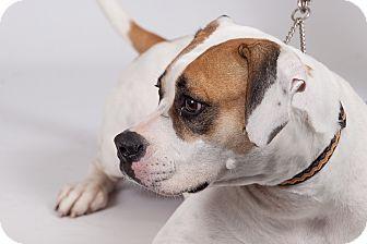 Hound (Unknown Type) Mix Dog for adoption in Jupiter, Florida - Crystal