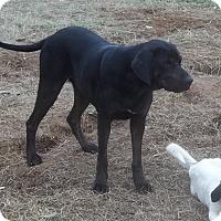 Adopt A Pet :: Momma C - East Hartford, CT