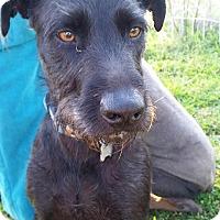 Adopt A Pet :: Hunter - Fillmore, CA