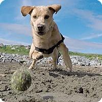 Adopt A Pet :: Cali - San Francisco, CA