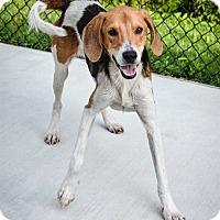 Adopt A Pet :: Castrol - Prince George, VA