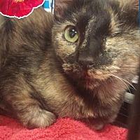 Adopt A Pet :: Angel - Arlington/Ft Worth, TX
