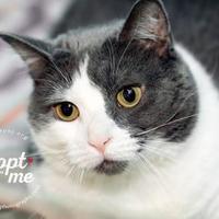 Adopt A Pet :: Trixie - Lindenwold, NJ