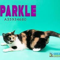 Adopt A Pet :: TCR16 7\17\17 - San Angelo, TX