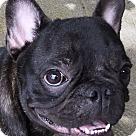 Adopt A Pet :: NeeNee