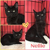 Adopt A Pet :: Nellie - Jeffersonville, IN