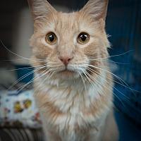 Adopt A Pet :: Frankie - New York, NY