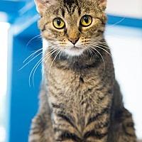 Adopt A Pet :: Feather - St. Paul, MN