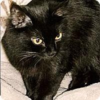 Adopt A Pet :: Sambuca - Medway, MA