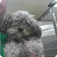 Adopt A Pet :: Peaches ADOPTED!! - Antioch, IL