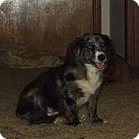 Adopt A Pet :: Callie - Jackson, TN