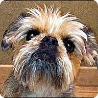 Adopt A Pet :: TESS - ADOPTION PENDING - Los Angeles, CA