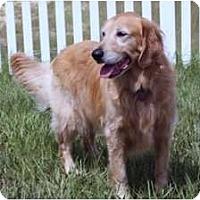 Adopt A Pet :: Kody - Minneola, FL