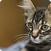 Adopt A Pet :: Oskar - Sacramento, CA