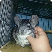 Adopt A Pet :: Toby - Jacksonville, FL
