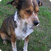 Adopt A Pet :: Chaviva - Phoenix, AZ