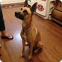 Adopt A Pet :: Marley - Hopkinton, MA
