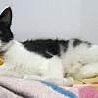 Adopt A Pet :: Schroeder - Powell, OH