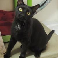 Adopt A Pet :: Black Berry - Westville, IN