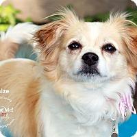 Adopt A Pet :: Maize - Shawnee Mission, KS