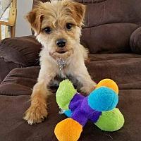 Adopt A Pet :: Cali - Acushnet, MA