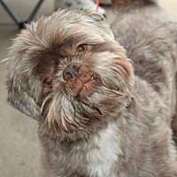 Adopt A Pet :: Jake - Fairmont, WV