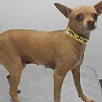 Adopt A Pet :: 18-07276 - Downey, CA