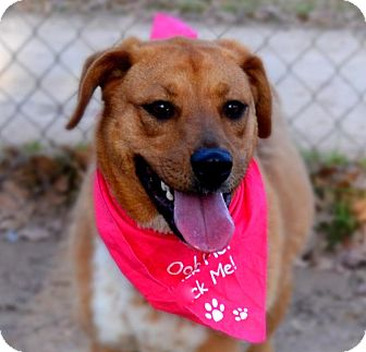 Shepherd (Unknown Type) Mix Dog for adoption in Burleson, Texas - Cheyenne