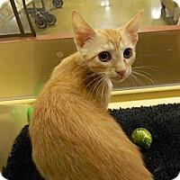 Adopt A Pet :: Conan - The Colony, TX