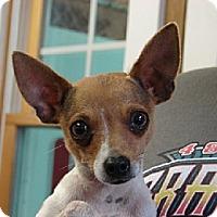 Adopt A Pet :: POCO - Scottsburg, IN