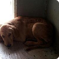 Adopt A Pet :: Ace & Boomer - Denver, IN