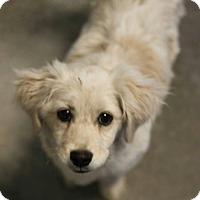 Adopt A Pet :: Kassidy - Phoenix, AZ