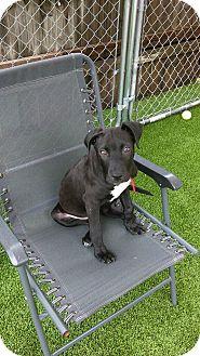 Hound (Unknown Type) Mix Dog for adoption in Nashville, Tennessee - Henry