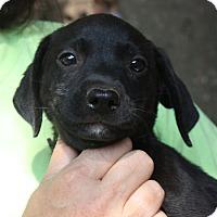 Adopt A Pet :: Rory - Marion, AR