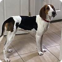 Adopt A Pet :: Sheila - Irmo, SC