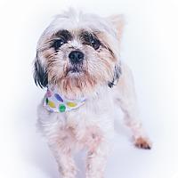 Adopt A Pet :: Faye - New Castle, PA