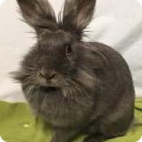 Adopt A Pet :: Roxy - Woburn, MA