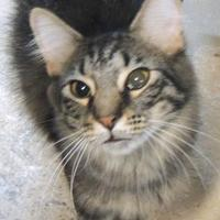 Adopt A Pet :: Charlie - Westville, IN