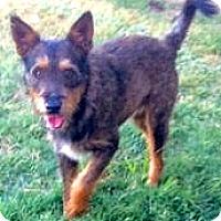 Adopt A Pet :: Wylie - Boulder, CO
