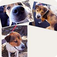 Adopt A Pet :: Boon - Phoenix, AZ