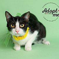 Adopt A Pet :: Ceanna - Pearland, TX