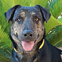 Adopt A Pet :: Toni - Las Vegas, NV