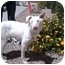 Photo 1 - Australian Shepherd Mix Dog for adoption in Mesa, Arizona - Paris